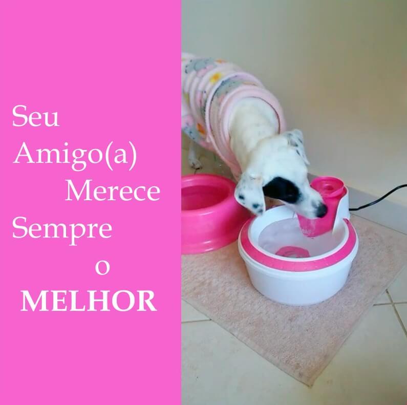 Fonte Bebedouro para gato ou cachorro com filtro Clássica Rosa.