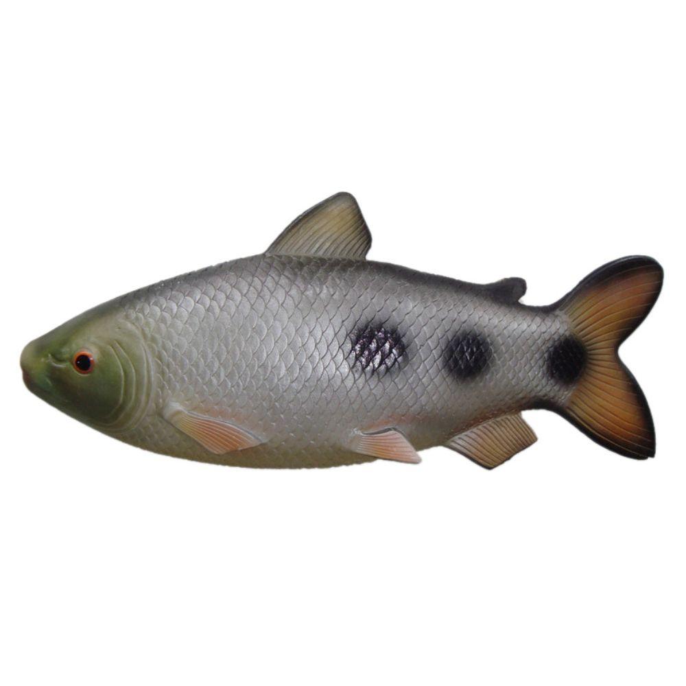Peixe Piau de parede em alto relevo para decoração.