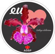 Adesivos AOSP - Cattleya schilleriana