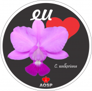 Adesivos AOSP - Cattleya walkeriana