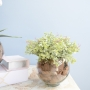 Arranjo de Folhagem Peperômia Artificial no Vaso de Vidro Pequeno| Linha Permanente Formosinha