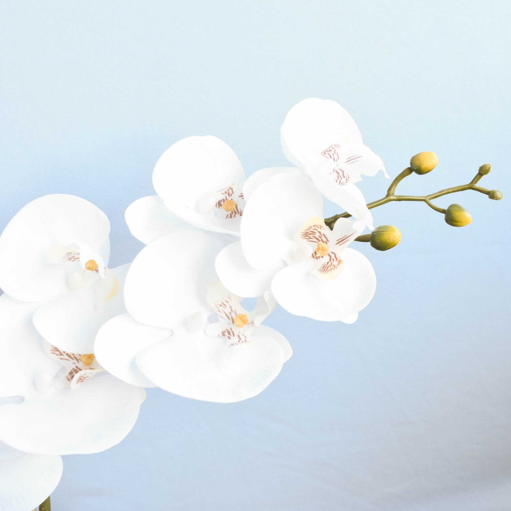 Arranjo de Orquídeas Artificiais de Silicone Branca no Vaso de Vidro | Linha Permanente Formosinha