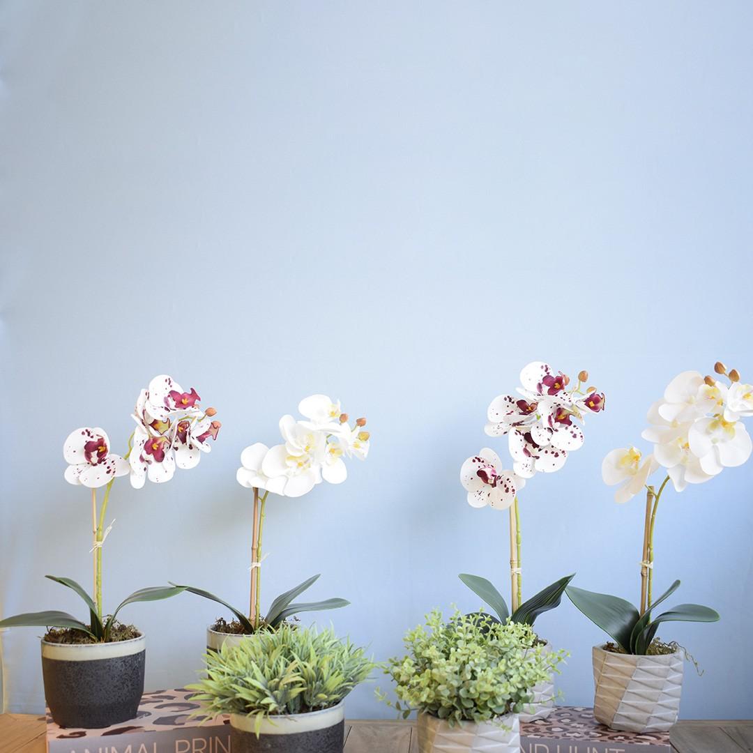 Arranjo de Flor Artificial Orquídea Branca no Vaso de Cimento Geométrico   Linha Permanente Formosinha