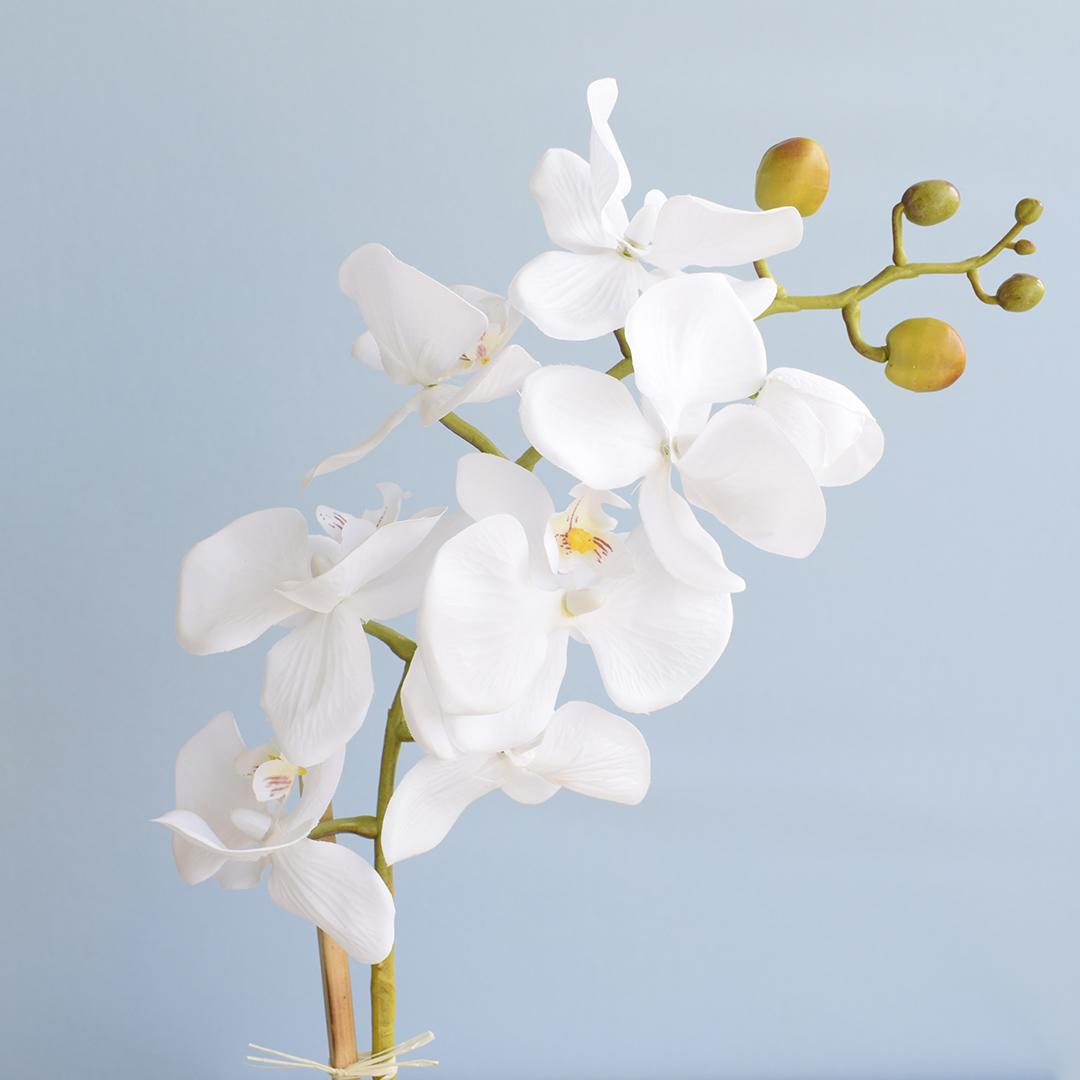 Arranjo de Flor Artificial Orquídea Branca no Vaso de Vidro Pequeno
