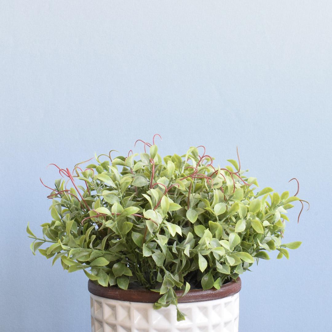 Arranjo de Flor Artificial Peperômia no Vaso de Cerâmica Branco | Linha Permanente Formosinha