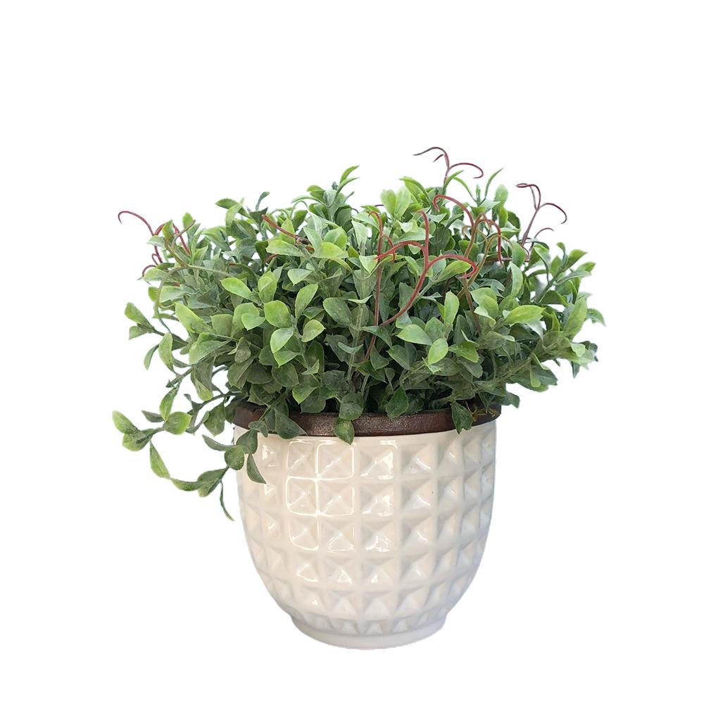 Arranjo de Flor Artificial Peperômia no Vaso de Cerâmica Branco   Linha Permanente Formosinha