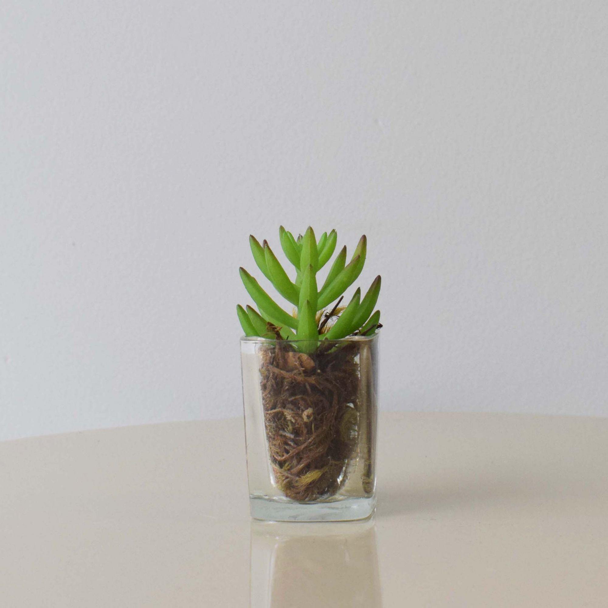 Arranjo de Mini Suculenta no Vaso de Vidro