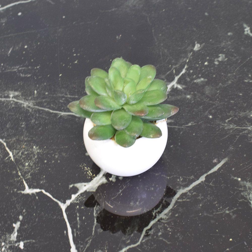 Arranjo de Mini Suculentas no Vaso Branco Plástico Linha Permanente Formosinha