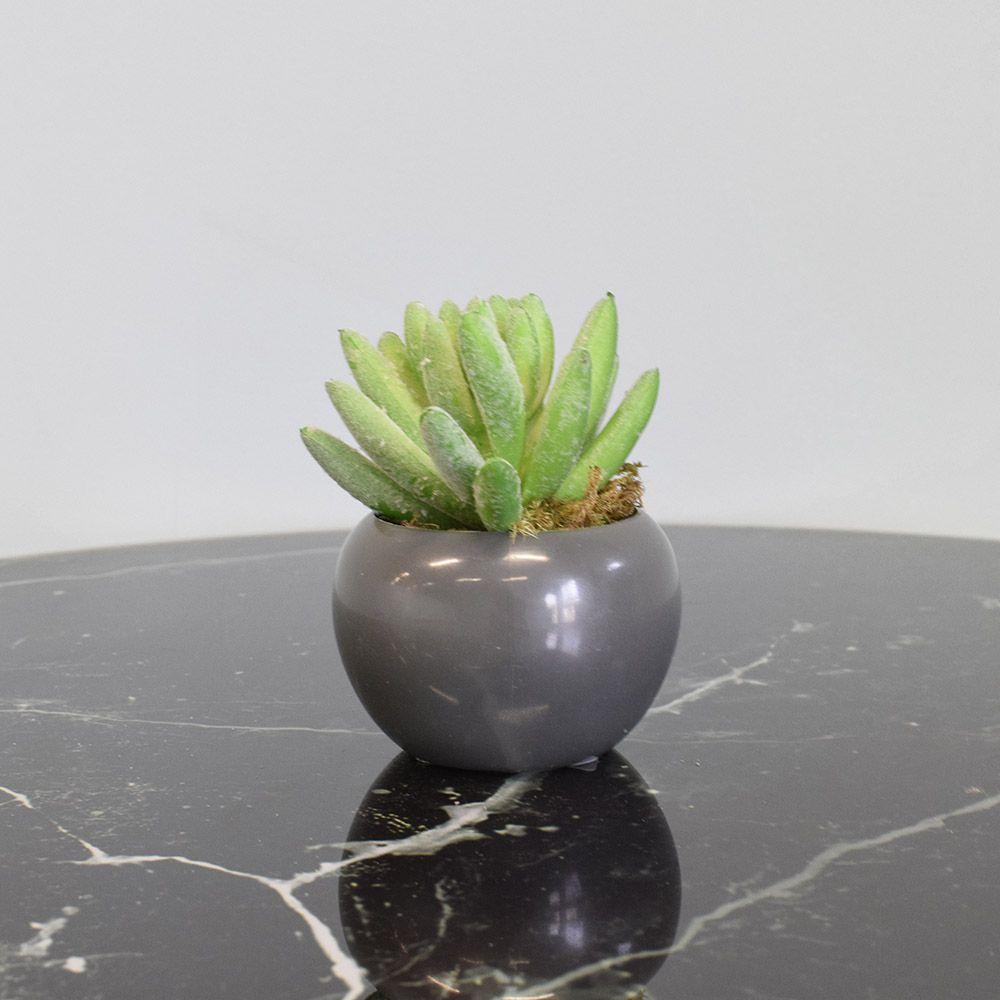 Arranjo de Mini Suculentas no Vaso Cinza Plástico|Linha Permanente Formosinha