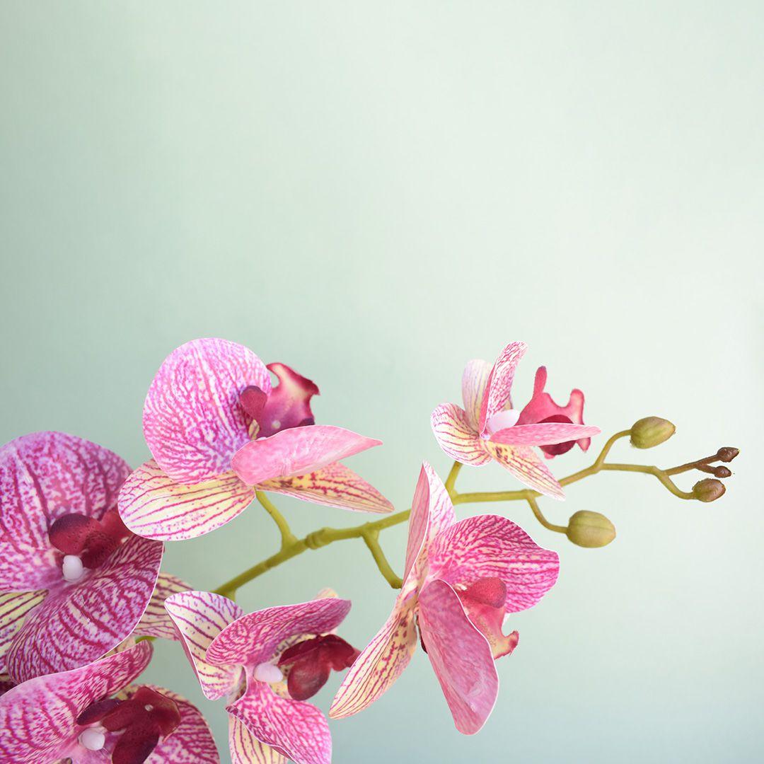 Arranjo de Orquídea Artificial Rosa 3D no Vaso Transparente Médio