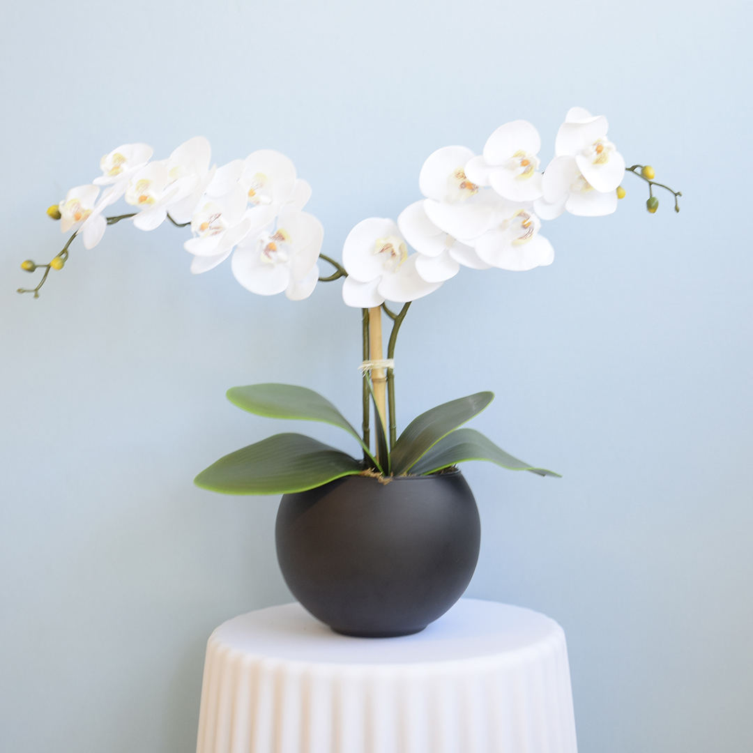 Arranjo de Orquídeas Brancas de Silicone no Vaso de Vidro Preto Fosco Médio | Linha Permanente Formosinha
