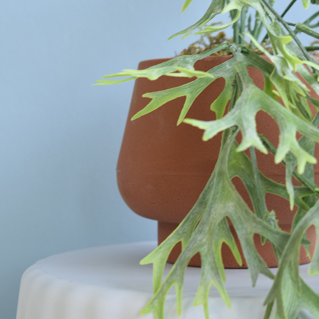Arranjo de Folhagem Pendente Chifre de Veado Artificial no Vaso Cumbuca Terracota | Formosinha