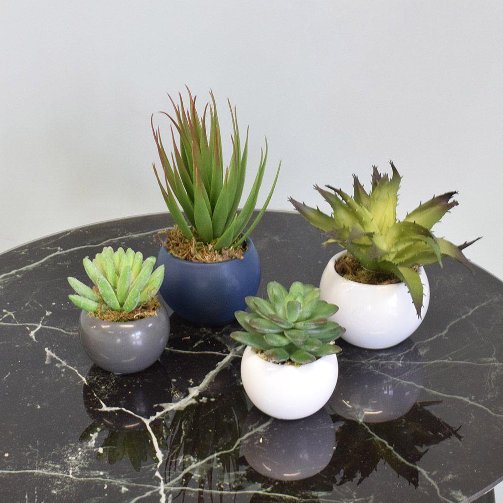 Arranjo de Suculenta no Vaso Branco de Cerâmica|Linha Permanente Formosinha