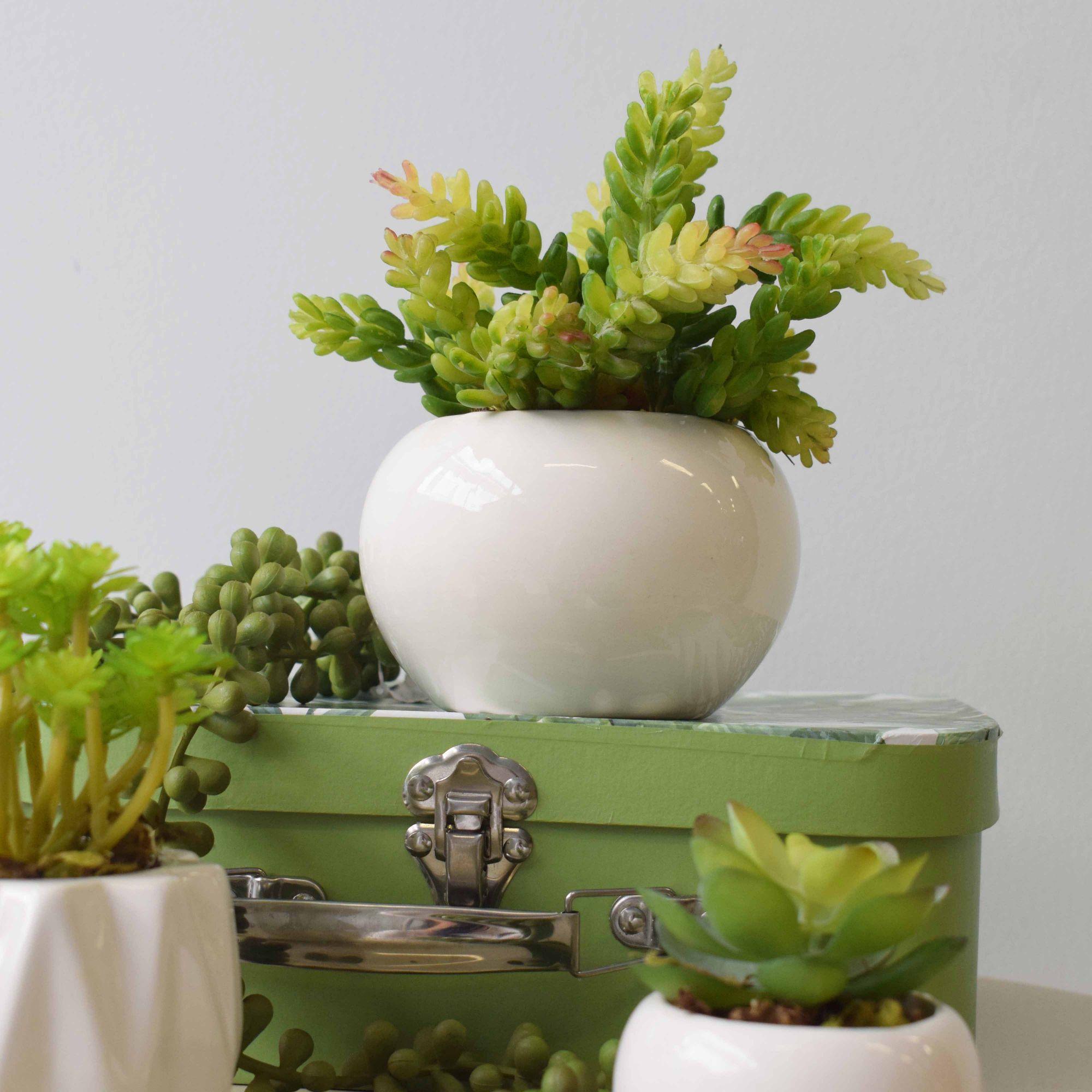 Arranjo de Suculenta no Vaso de Cerâmica Branco