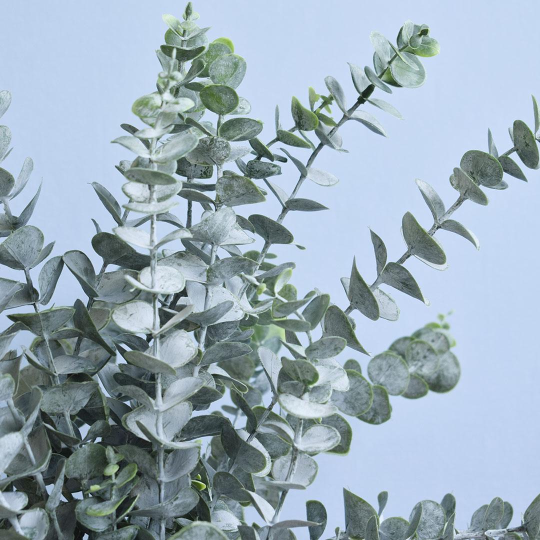 Arranjo de Eucaliptos Artificiais Toque Real  no Vaso Branco de Cerâmica | Formosinha