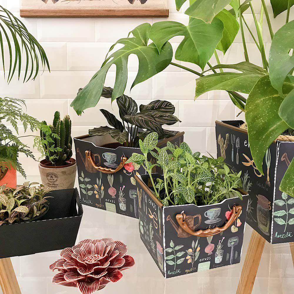 Cesto Pequeno Herbal | Linha Organize Formosinha