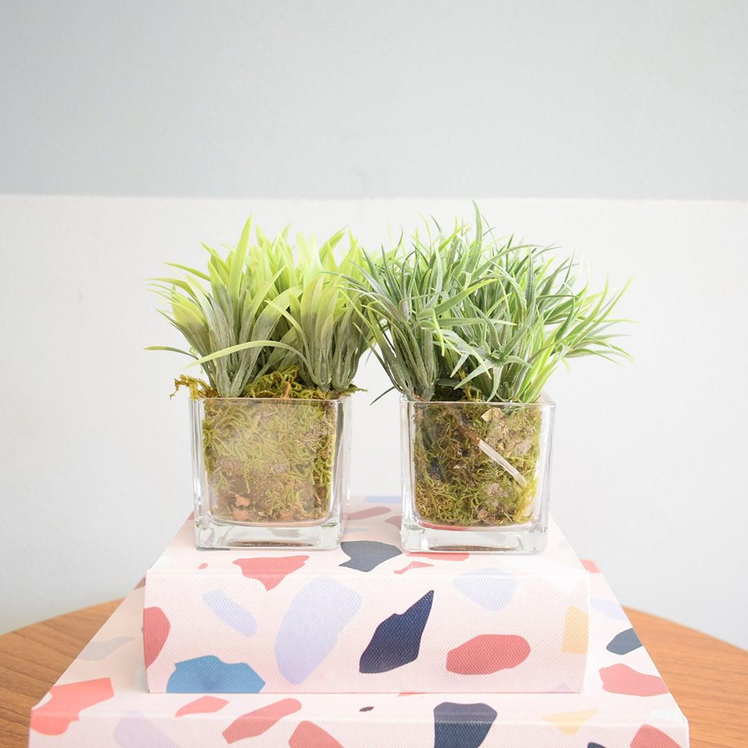 Conjunto com Dois Arranjos de Mini Capim Artificial no Vaso de Vidro|Linha permanente Formosinha