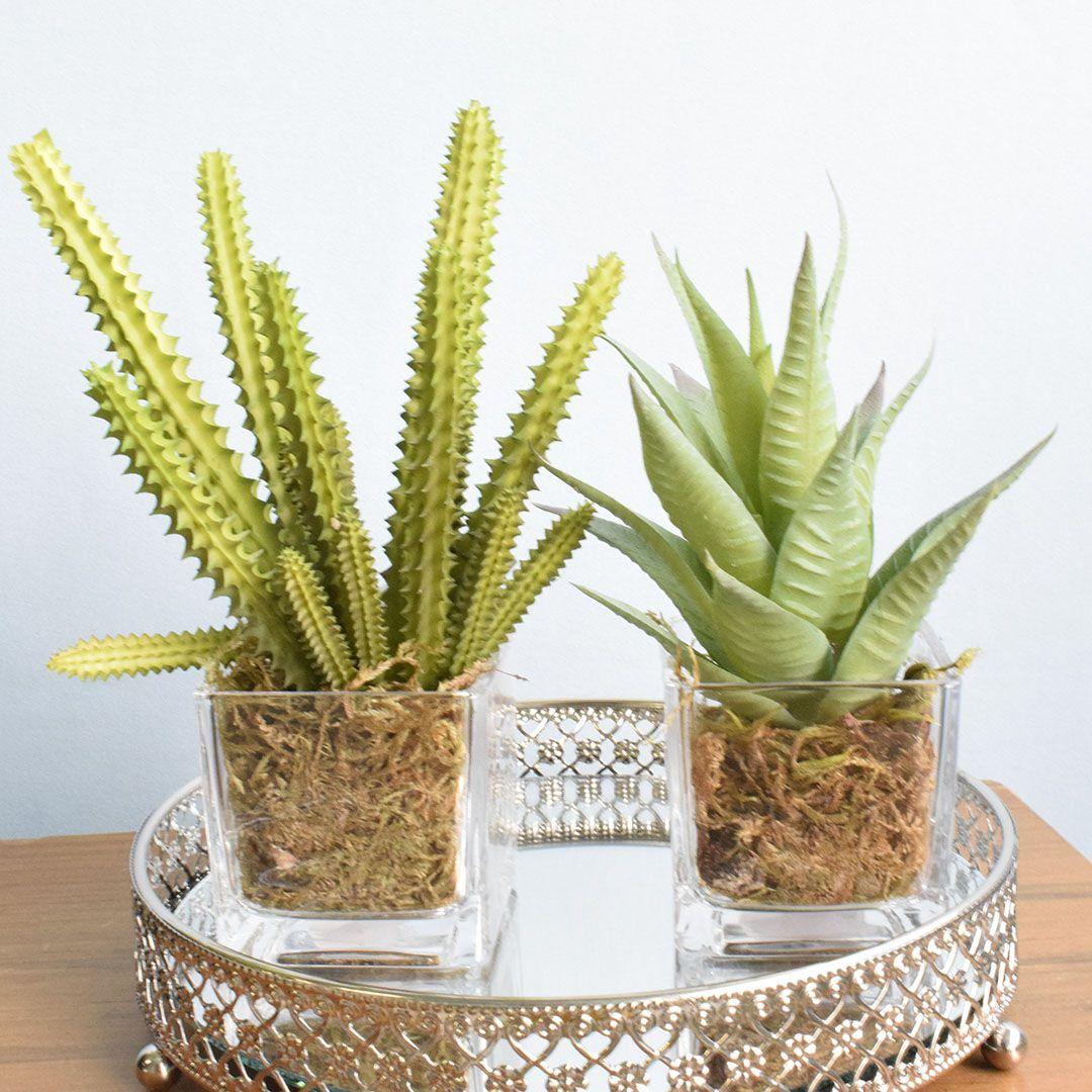 Conjunto com Dois Arranjos de Mini Suculenta no Vaso de Vidro|Linha permanente Formosinha