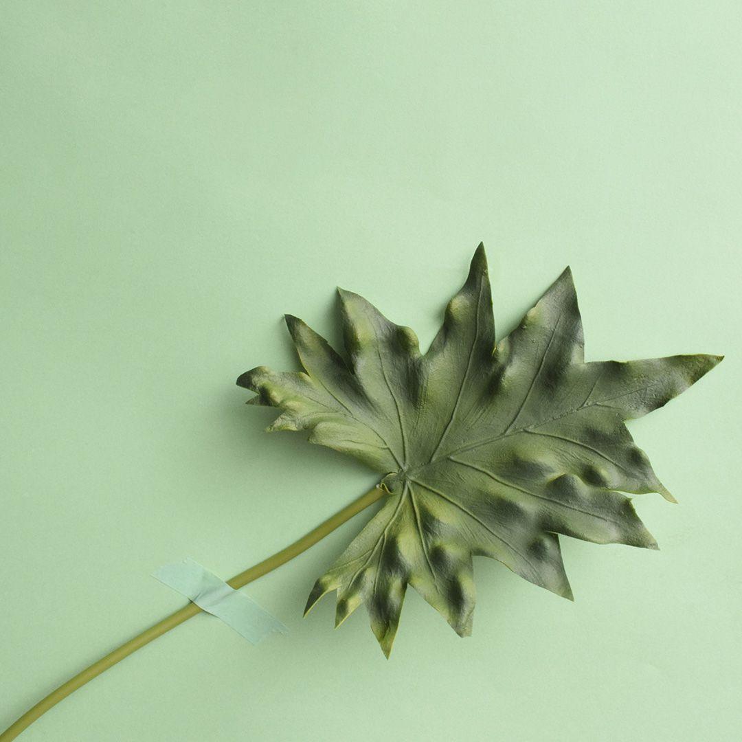 Folha de Guaimbé Artificial  | Linha Permanente Formosinha