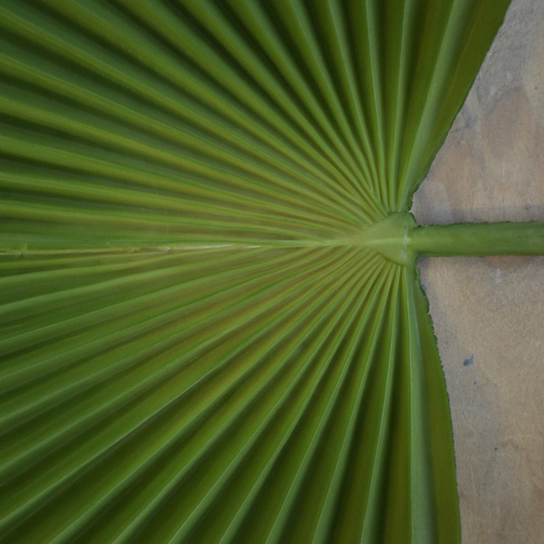 Folha de Latania Artificial Toque Real | Linha Permanente Formosinha
