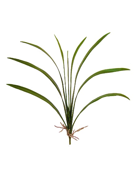Folha Orquidea X9 com raiz (Alt.60cm)