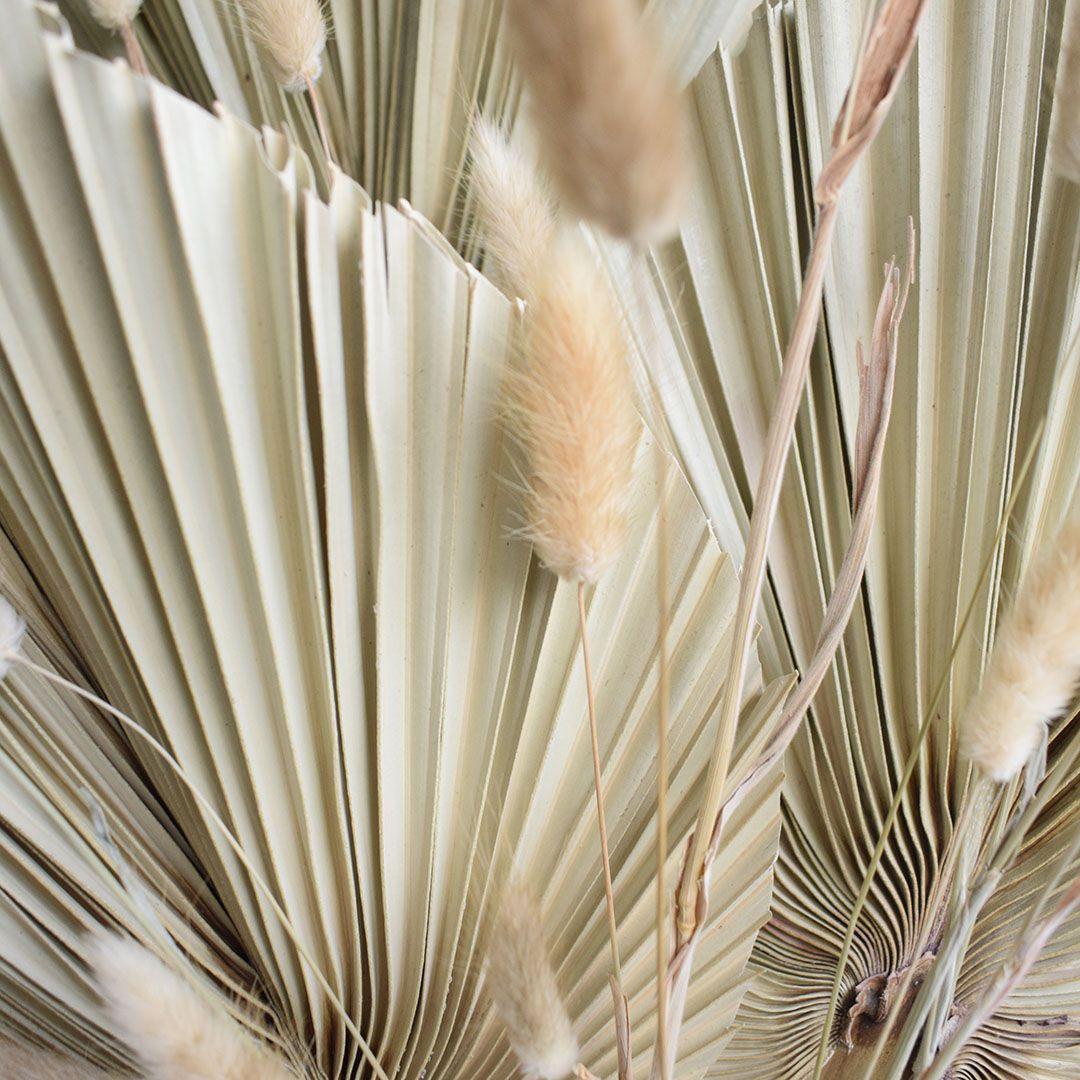 Kit com 3 Folhas de Latânia Natural Desidratada | Linha Outonada Formosinha