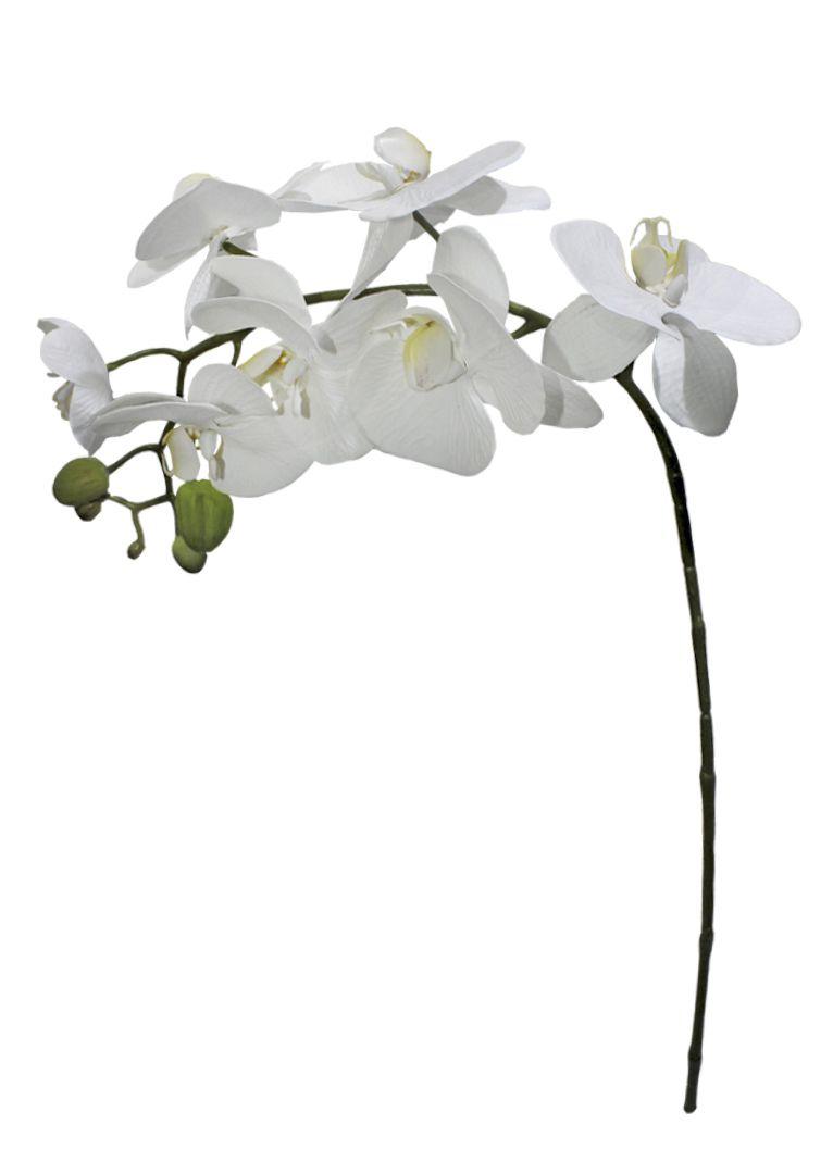 Haste de Orquídea Toque Real Branca
