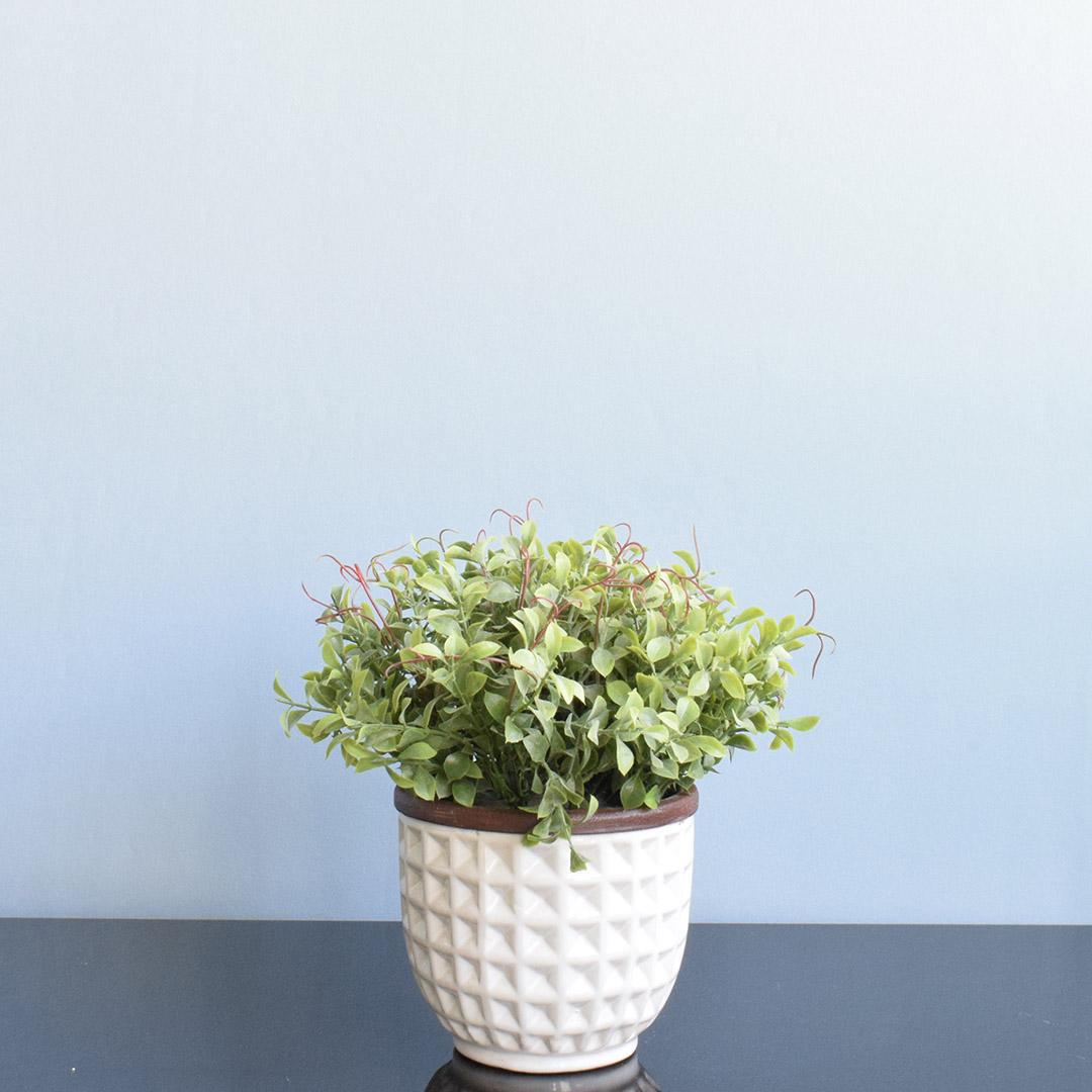 Kit com 2 Arranjos de Orquídea Branca e Peperômia  no Vaso de Cerâmica Branco |  Formosinha