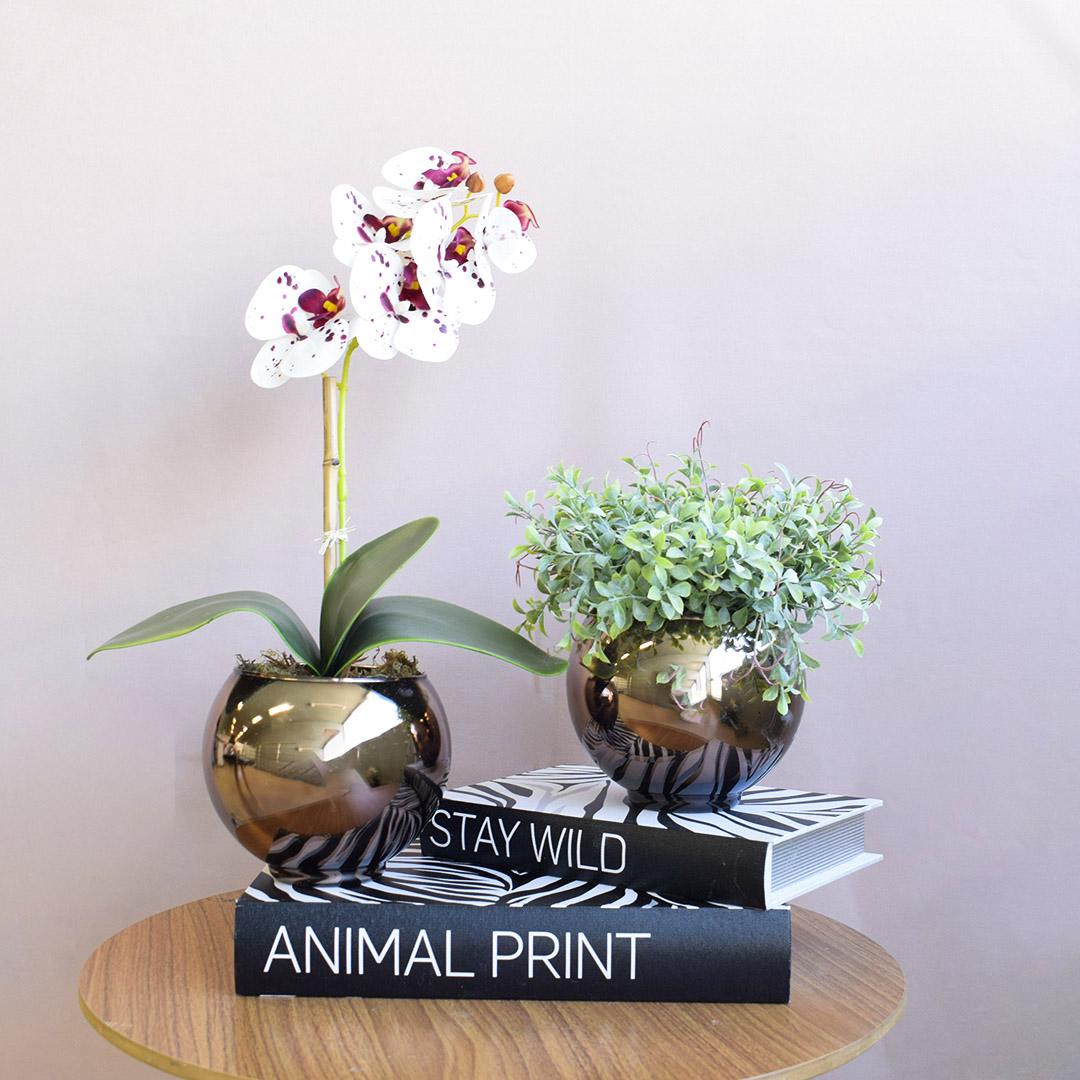 Kit com 2 Arranjos de Orquídea Tigre e Peperômia no Vaso Bronze | Linha Casa 255