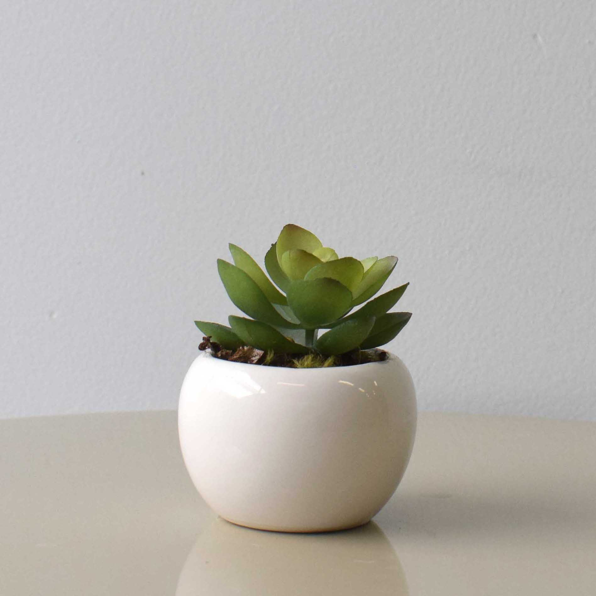 Arranjo de Suculenta no Vaso de Cerâmica