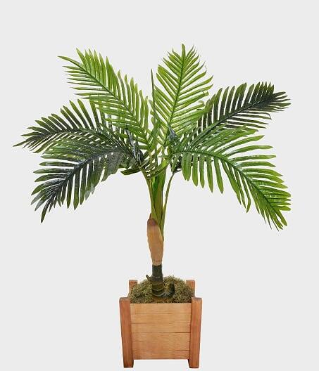 Pl Palmeira X6 Verde