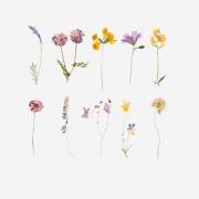 Adesivo Flower - 10 unidades