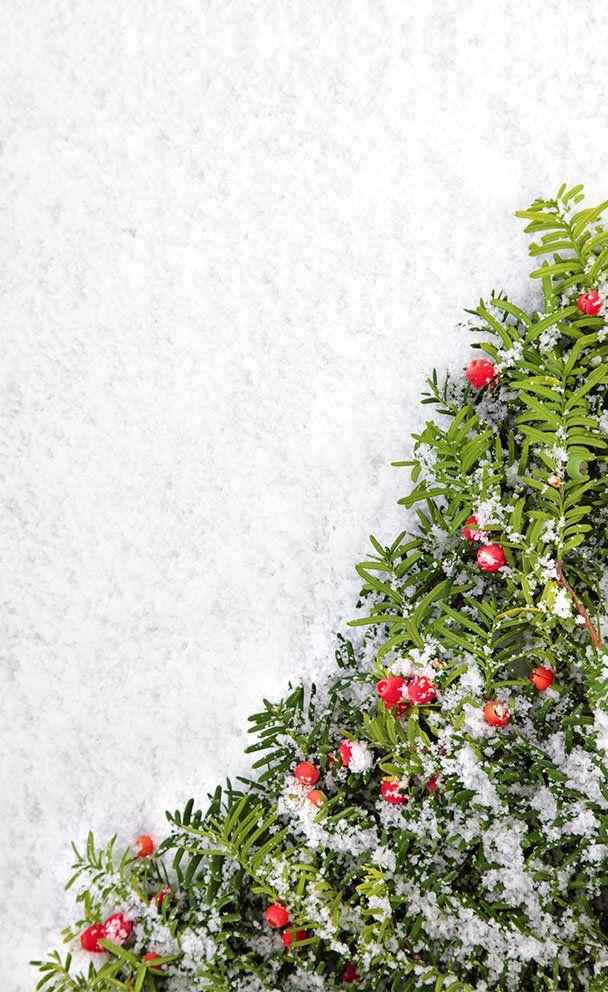 Fundo Infinito Fotográfico Temático em Tecido Lavável Dry-fit - Tema Natal 16