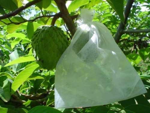 Sacos Tnt Para Proteção De Frutas No Pé 10x15cm 150 Peças