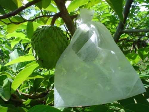 100 Sacos Em Tnt Para Proteção De Frutas No Pe 10 X 15 Cm