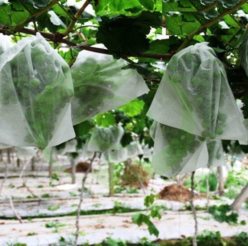 Sacos Em Tnt Para Proteção De Frutas No Pe 28 X 45cm Branco  com Amarrilho