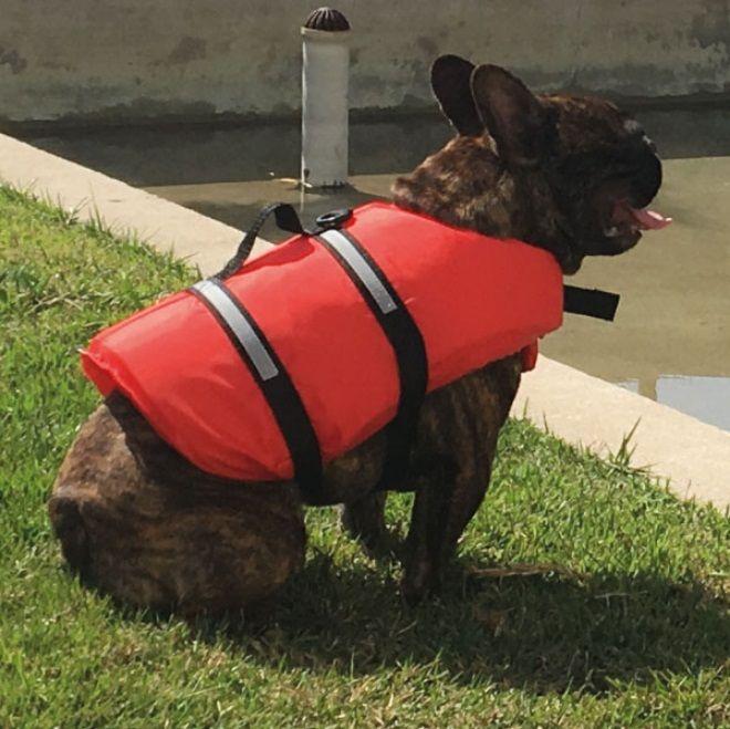 Colete Salva-Vidas para Cachorros e Gatos Tamanho G até 36 kg em Poliéster 210D