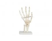 Articulação da Mão em Tamanho Real