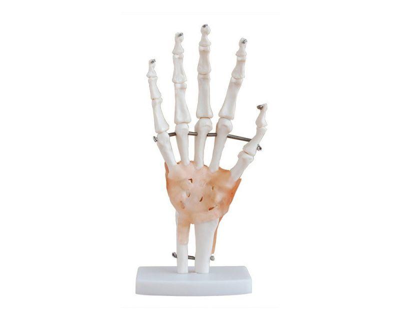 Articulação da Mão em Tamanho Real com Ligamentos Flexíveis