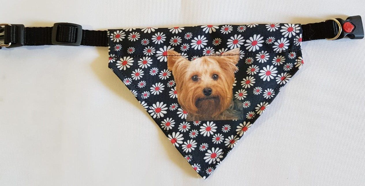 Coleira Bandana de raças para cães pequenos .