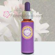 Angélica Perfumada - 10 ml