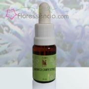 Arnica Campestre - 10 ml