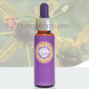 Arruda - 10 ml