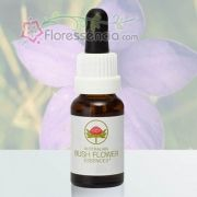 Bluebell - 15 ml