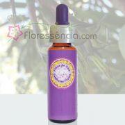 Bromélia Estrela - 10 ml