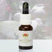 Bush Gardenia - 15 ml
