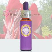 Caetê Vermelho - 10 ml