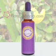 Cálice de Ouro - 10 ml