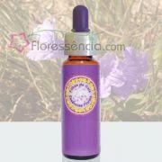 Campânula Lilás - 10 ml