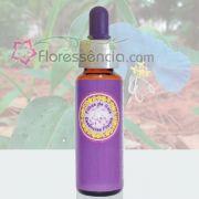 Capim de Santa Luzia - 10 ml